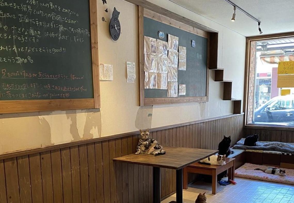 保護猫譲渡カフェ 和風桶猫喫茶