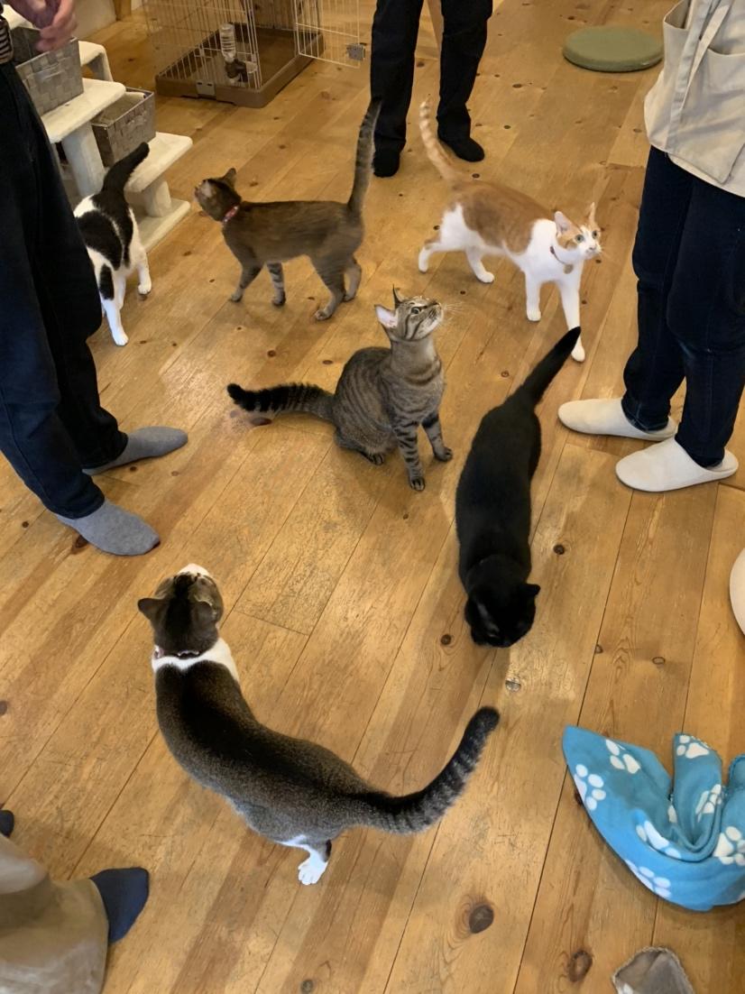 猫草ターイム!(おやつタイムもこんな感じです♡)