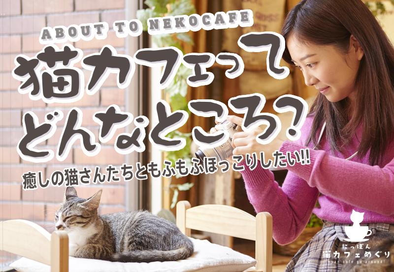 猫カフェってどんなところ?癒しの猫さんたちと、もふもふほっこりしたい!!