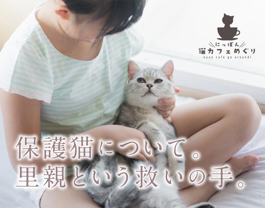 保護猫について。里親という救いの手。