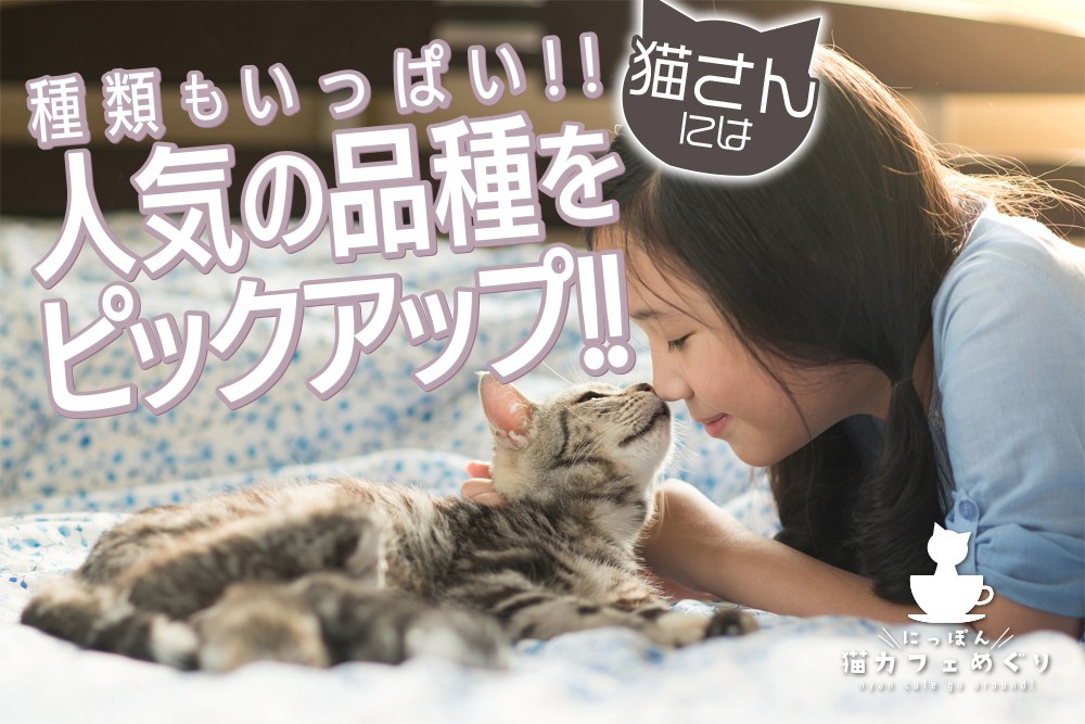 猫さんには種類もいっぱい!!人気の品種をピックアップ!!