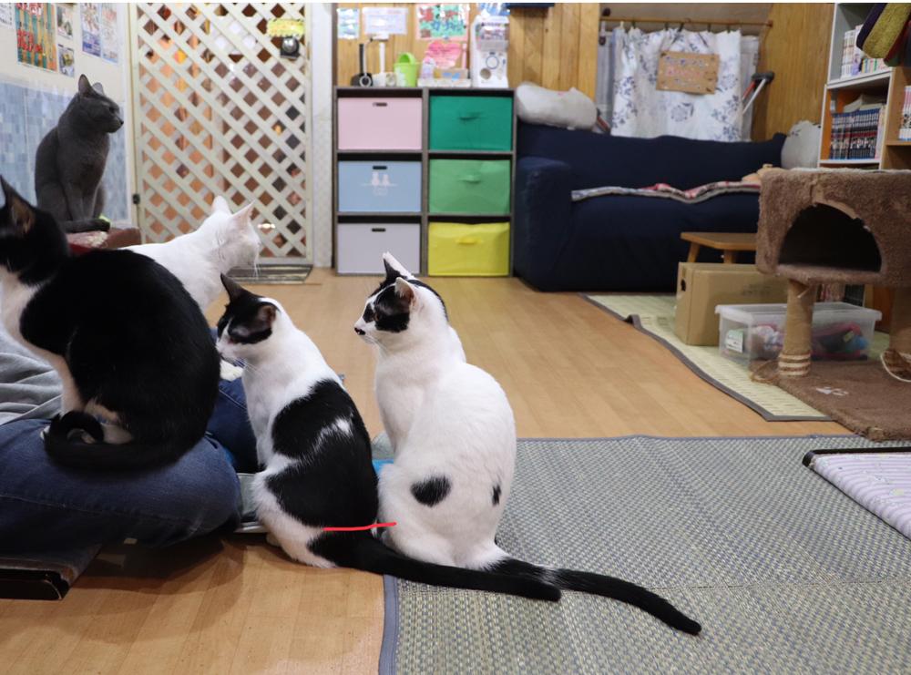 猫カフェSHANA