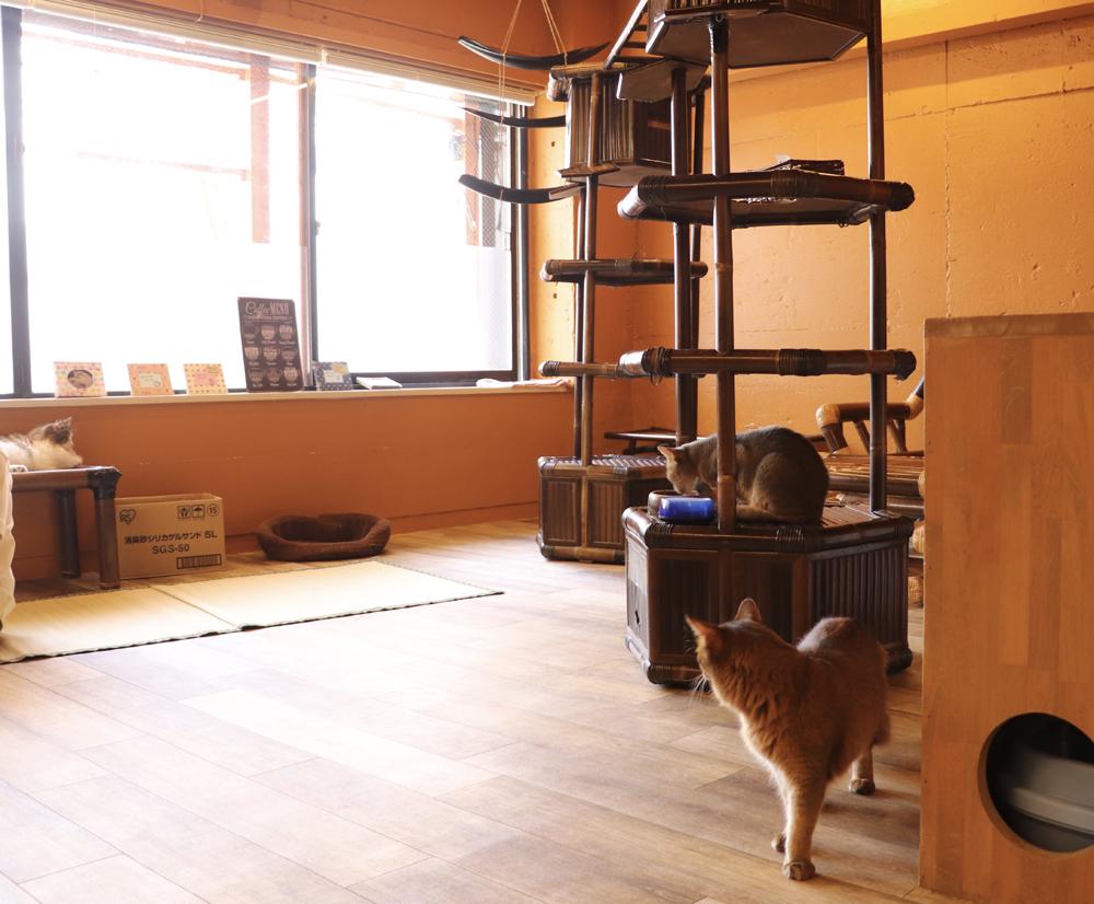 猫cafe ぐるぐる堂アメリカ村店