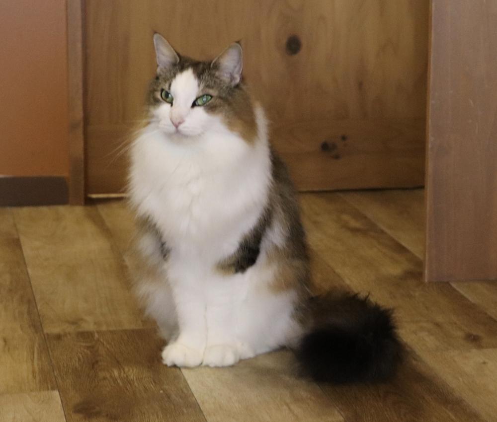 看板猫のシヴァくんです