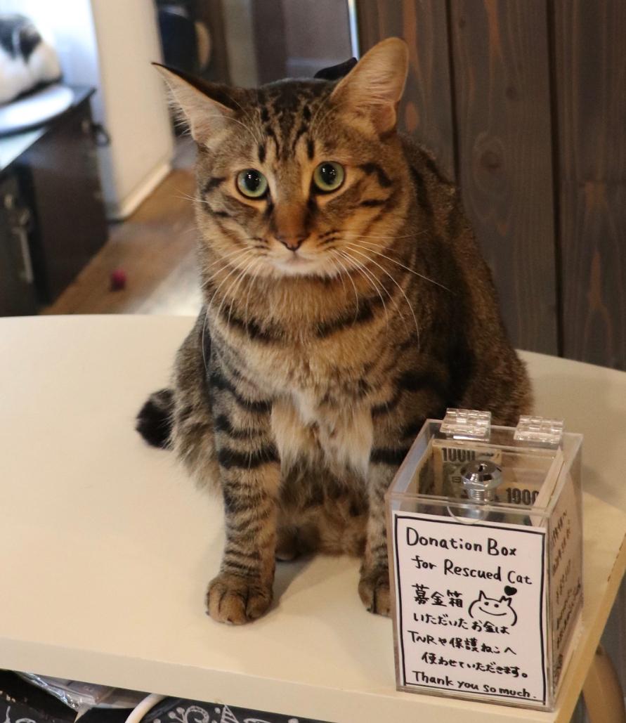 二匹いるスタッフ猫のてんまくんです。