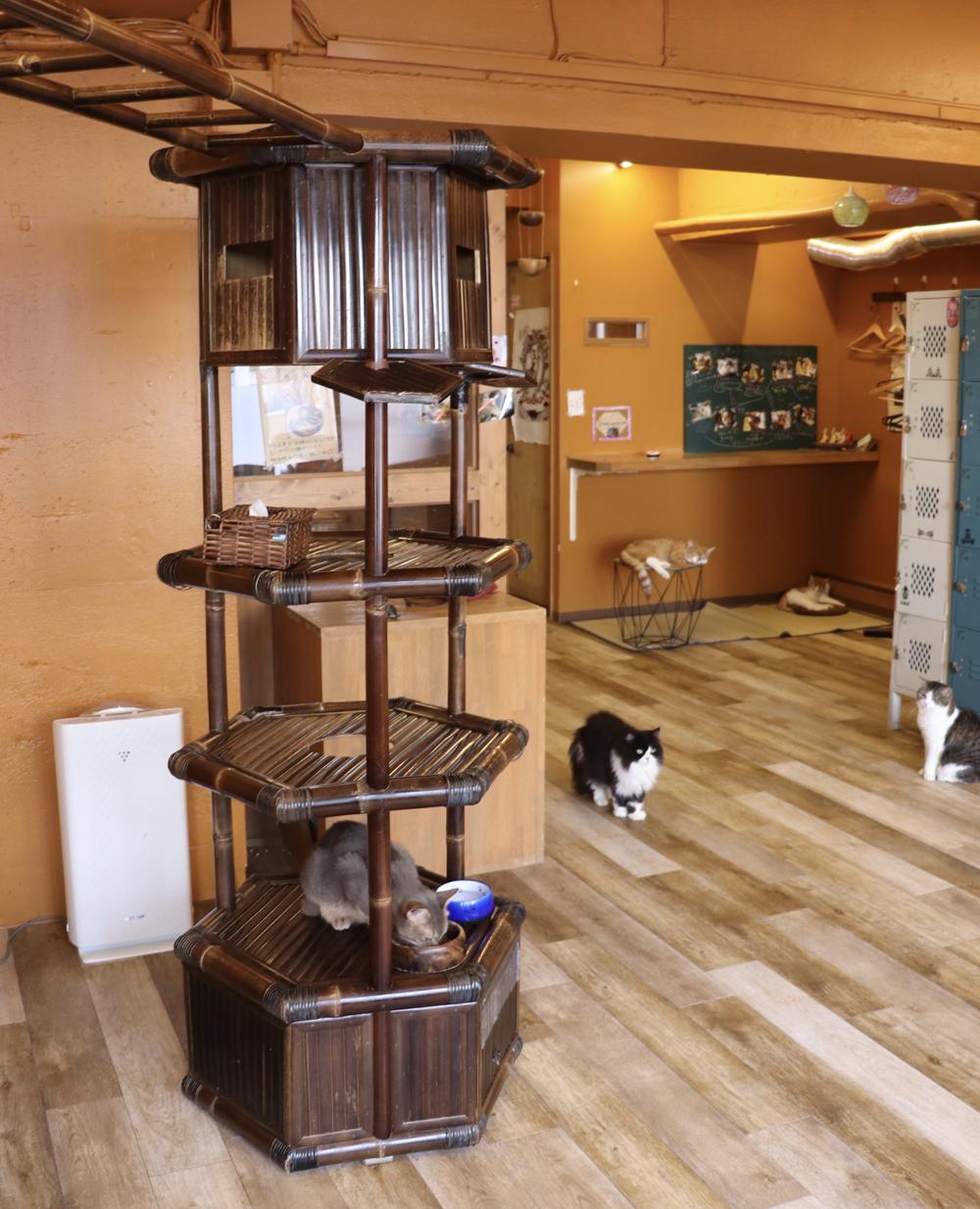 バリ島工房で特注したバンブー製のキャットタワー